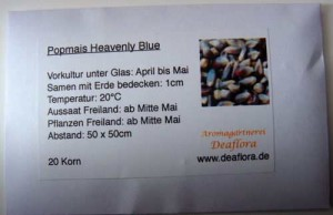Saatgut popcornmais heavenly blue