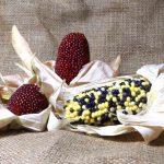Popcorn selber anbauen, Ernte und Verwertung